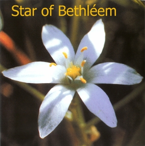 star-of-bethleem
